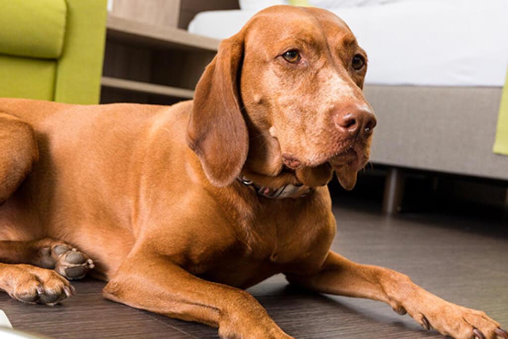 Siebenquell Hotel – Urlaub mit Hund